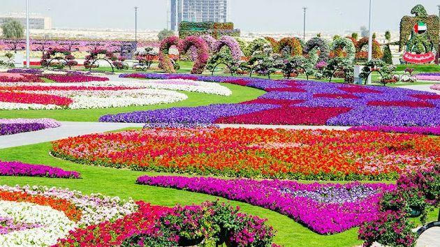 Dubai Miracle Garden - огромный цветочный парк, где высажено несколько десятков видов цветов